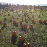 The Pumpkin Patch.