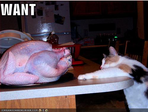 funny pictures cat wants turkey