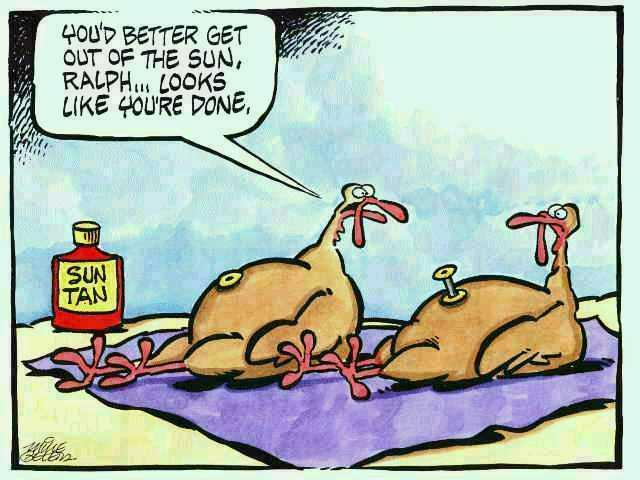 funny thanksgiving turkey cartoon