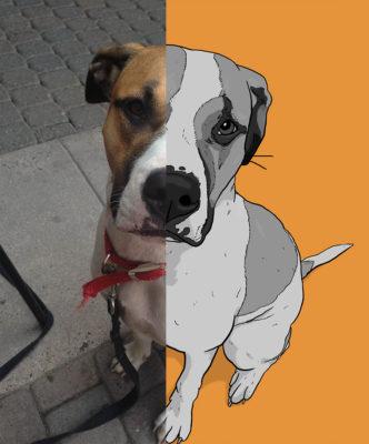 Pet Pictures Art