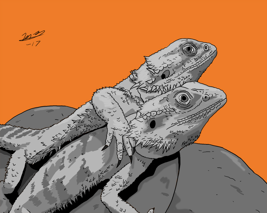 Bearded Dragon Pet Portraits