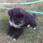 Dexter Puppy Photo