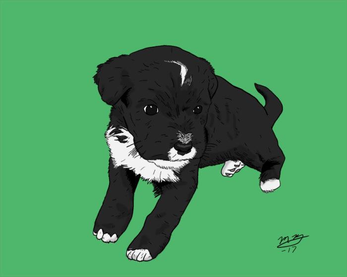 puppy pet portrait