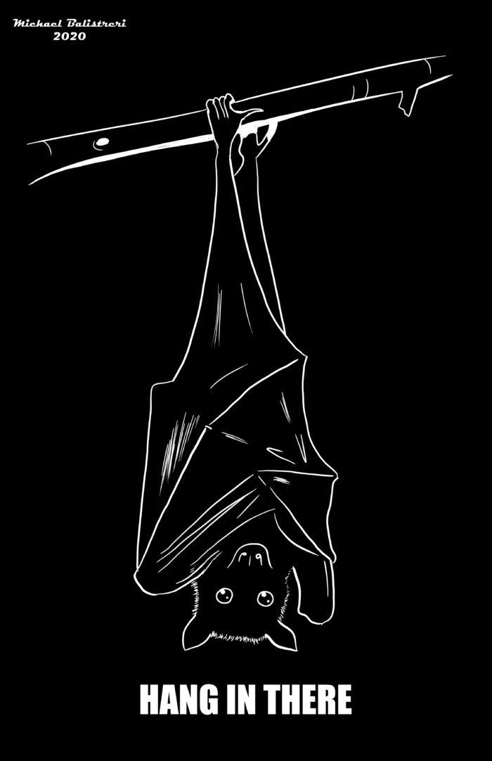 Hang In There Bat