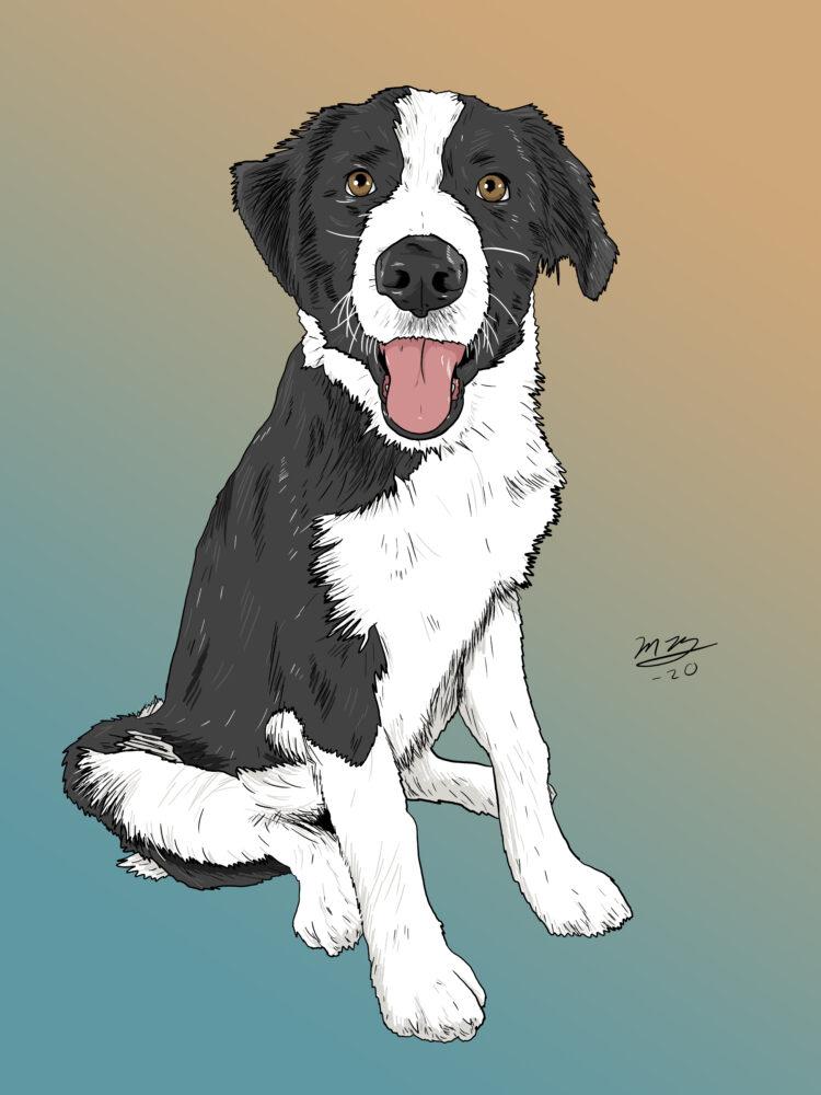 Dog Pet Portrait